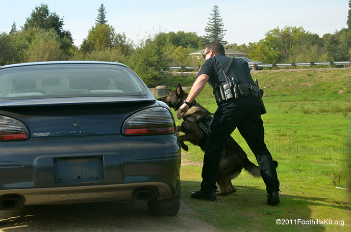 Kevin Tonn & K9 Yaro Training